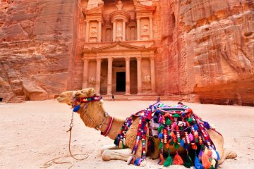 bedouin-camel-rests-near-the-treasury-al-khazneh-carved-into-the-rock-at-petra