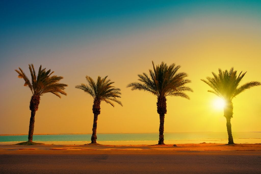 dead sea date palm trees