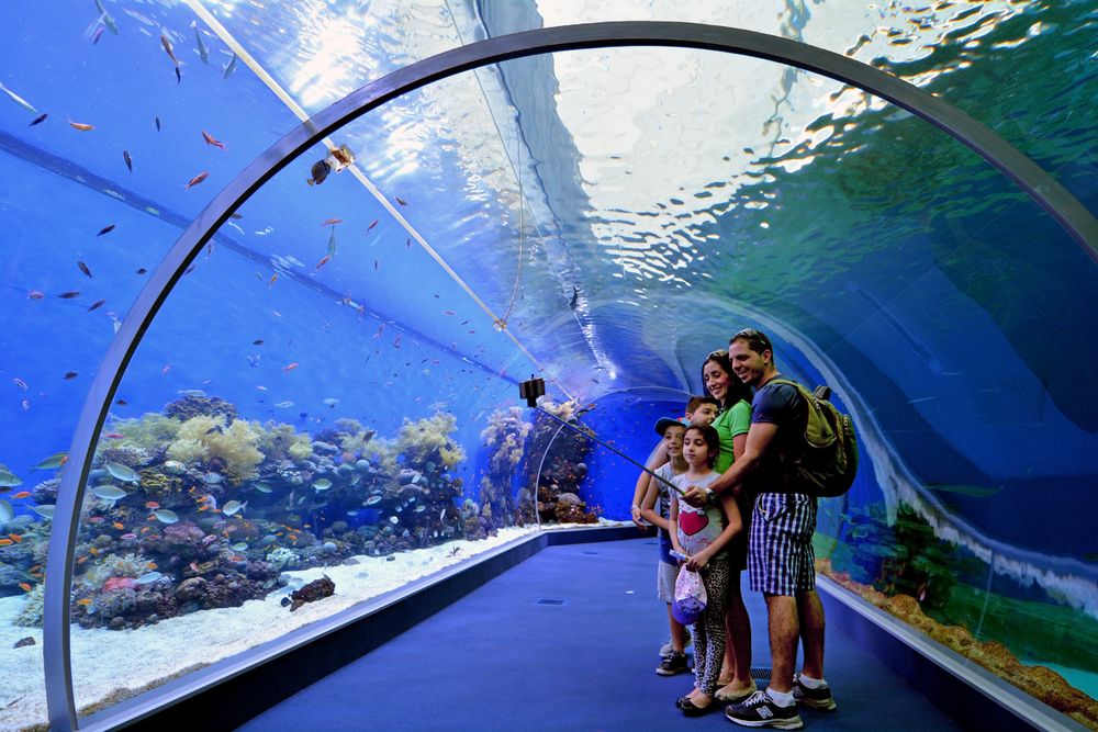 things to do in eilat_aquarium
