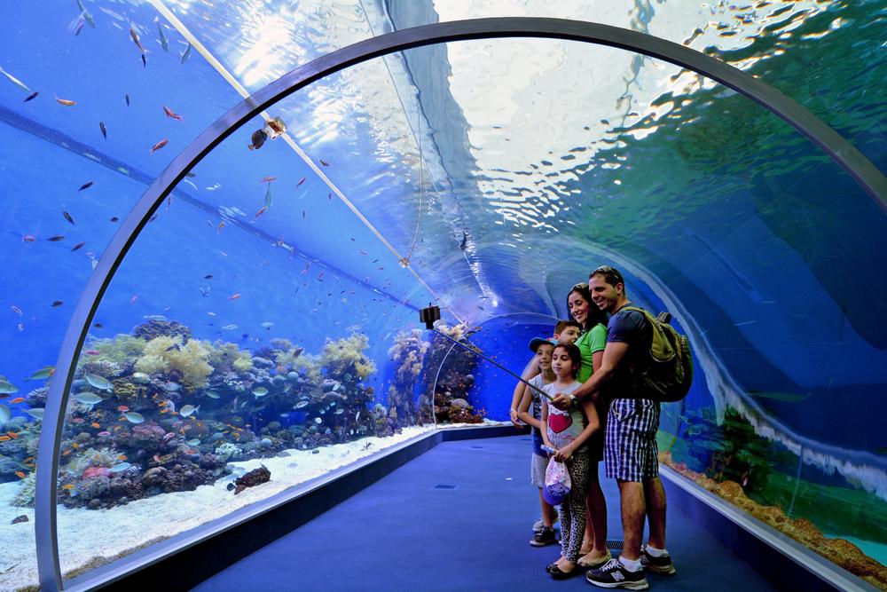 things to do in eilat_aquarium