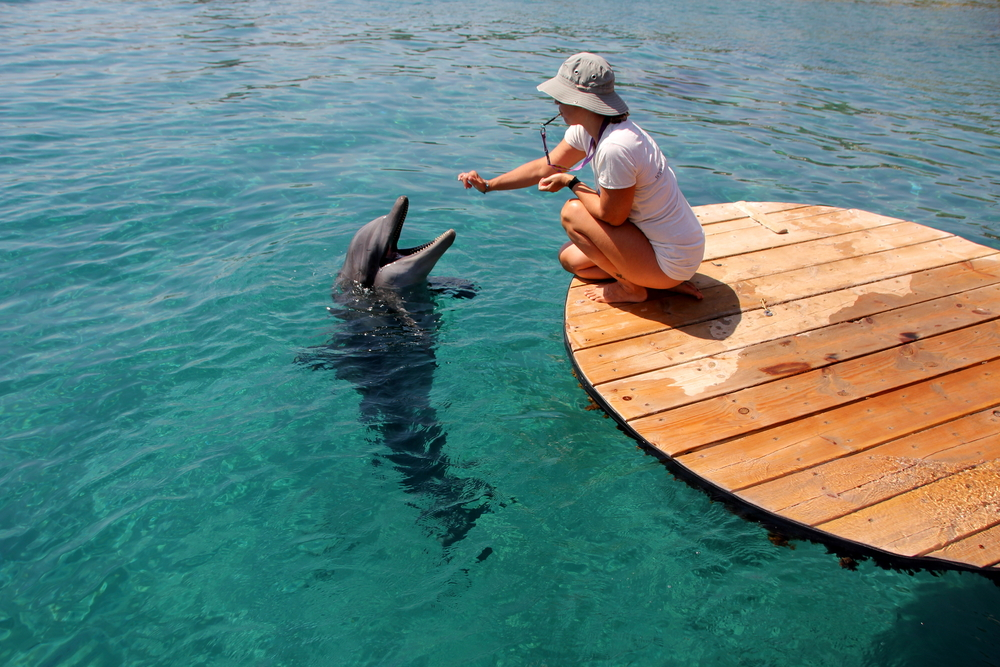 things to do in eilat_dolphinarium