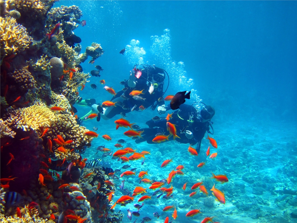 things to do in eilat_diving
