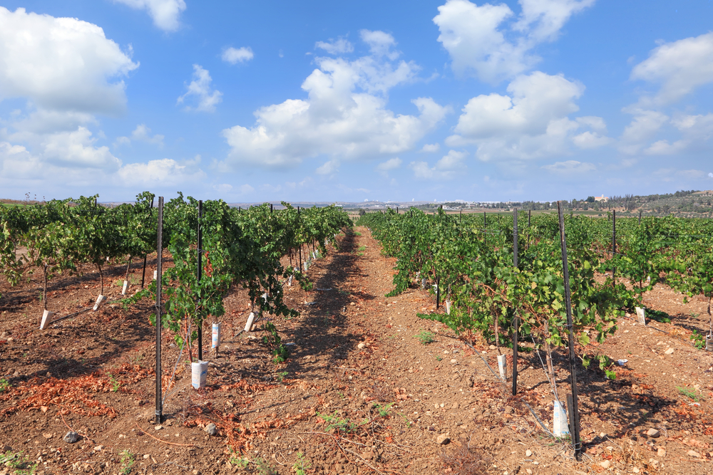 Israel wine tour_yatir winery